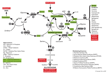 Click to view a large image of the methylation process diagram